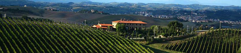 vineyards in barolo - wine education